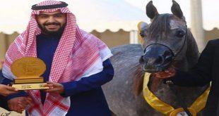 عبد الله بن سعد التويجري: نسعى للفوز بكأس العالم لجمال الخيل في مسابقة باريس