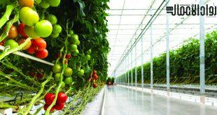 دراسة جدوى.. كيف تؤسس مشروع الصوب الزراعية؟