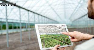أفكار المشاريع الزراعية