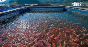 دراسة جدوى مشروع مزرعة أسماك