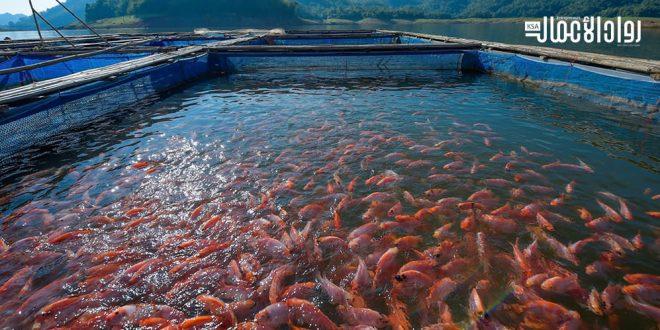 دراسة جدوى مشروع مزرعة أسماك من المنزل