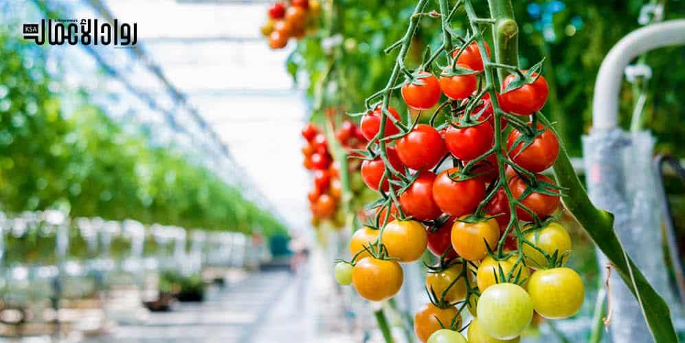 درسة جدوى مشروع الصوب الزراعية