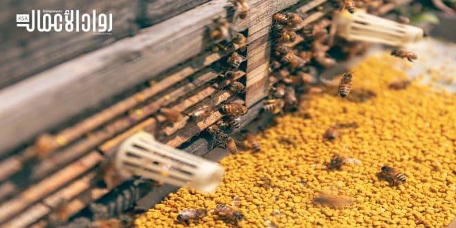 دراسة جدوى مشروع منحل لإنتاج العسل