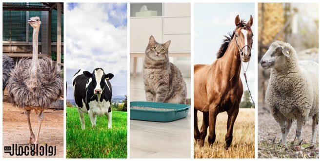 أفكار مشاريع الإنتاج الحيواني المربحة لرواد الأعمال