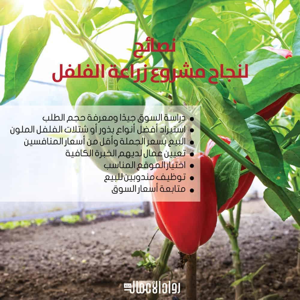 مشروع زراعة الفلفل الملون