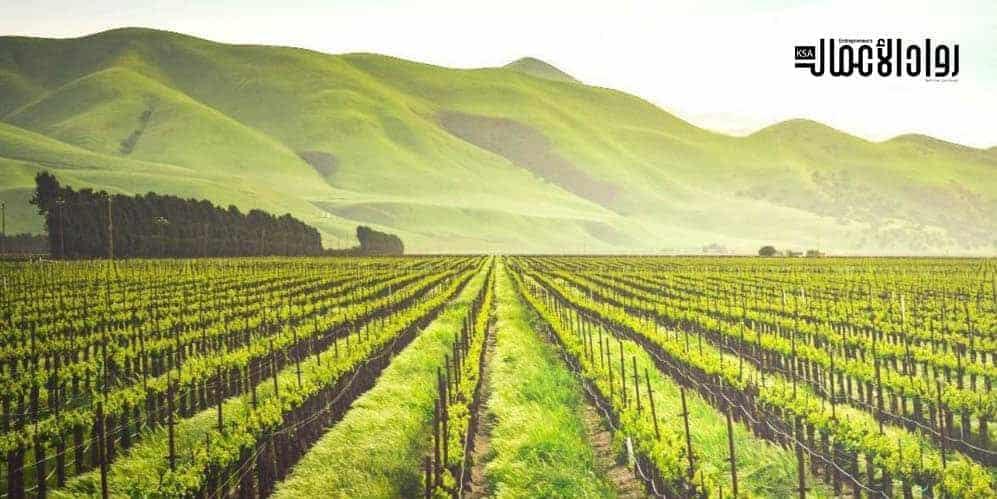 مراحل تنفيذ المشروع الزراعي.. خطوات على الطريق