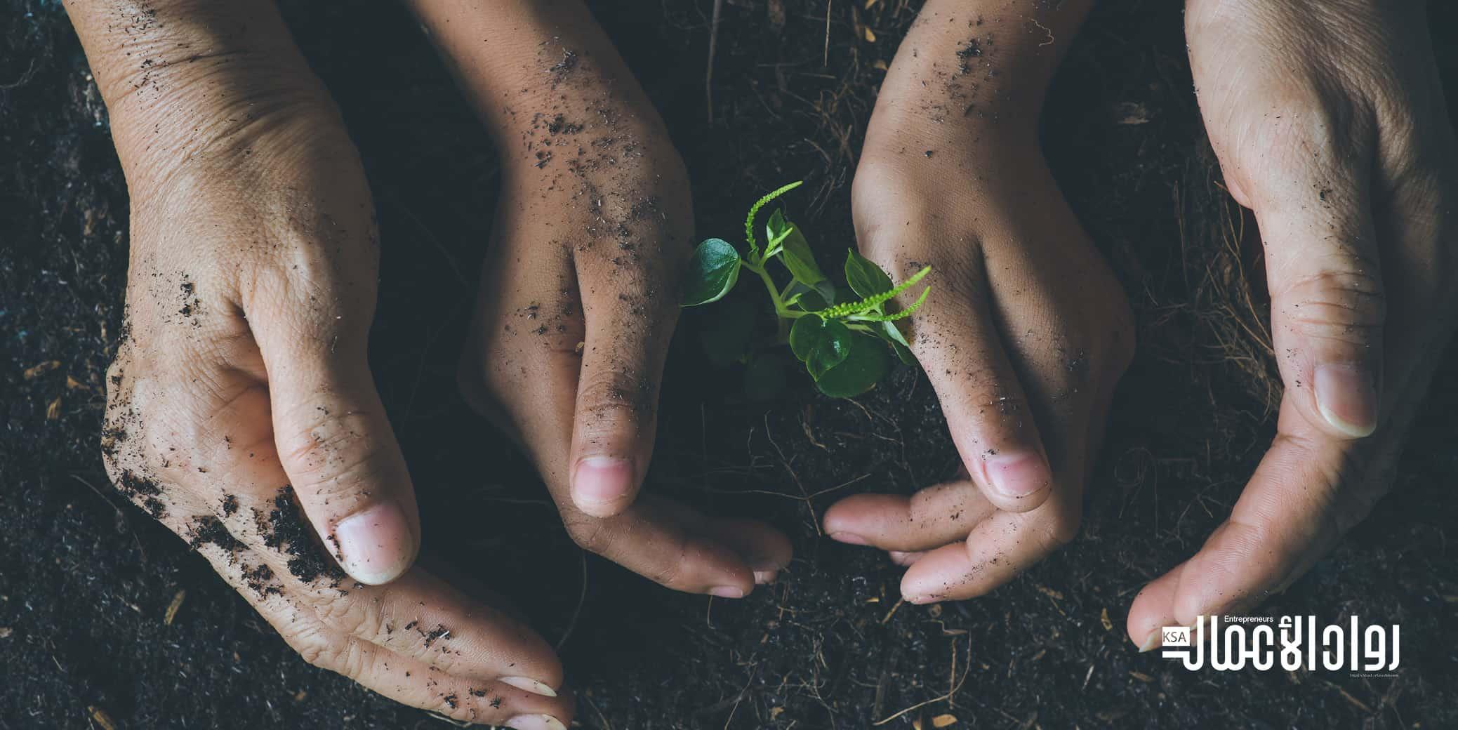 الزراعة بدون تربة