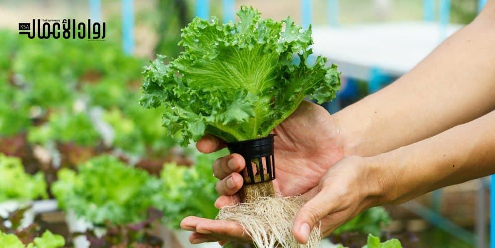 نظام الزراعة المائية.. أساليب حديثة لإنتاج النباتات