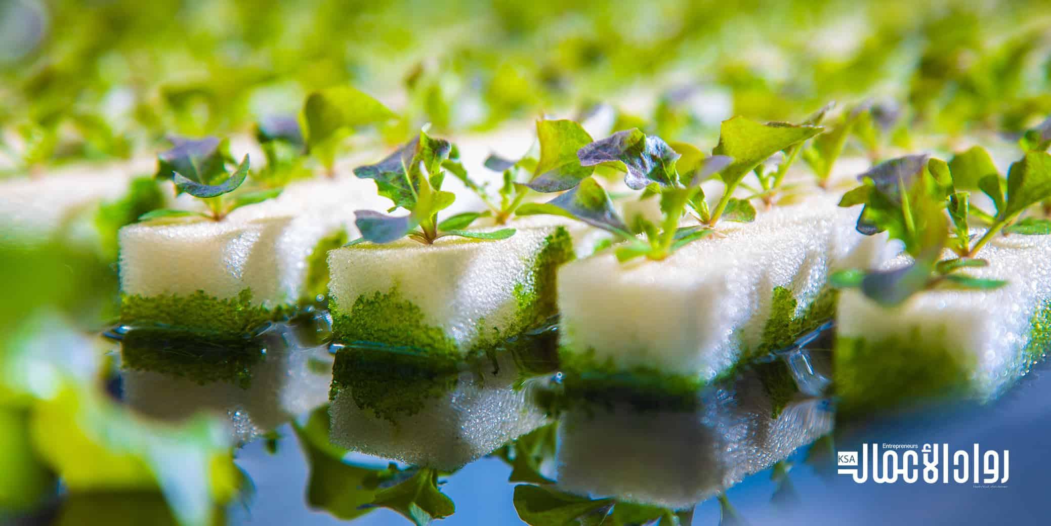 نظام الزراعة المائية