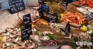 مشروع تجارة الأسماك