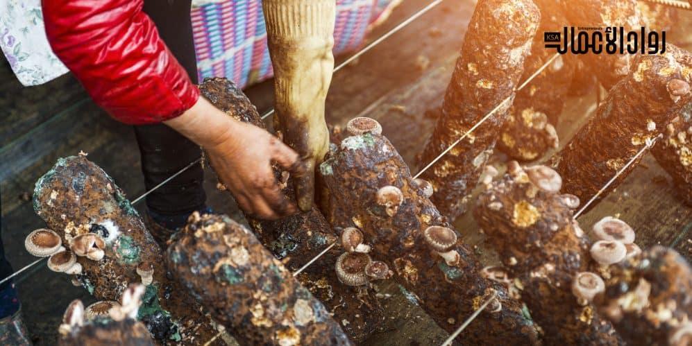 مشروع زراعة المشروم.. ما هي مميزاته؟